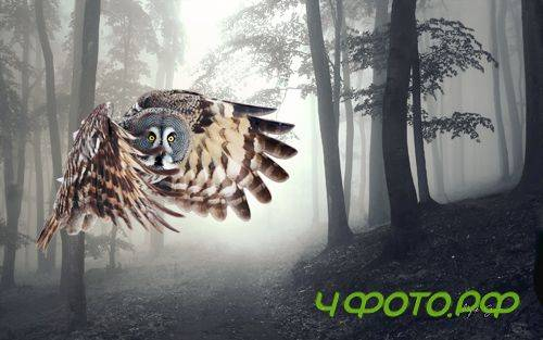 Owl Flying in the Forest