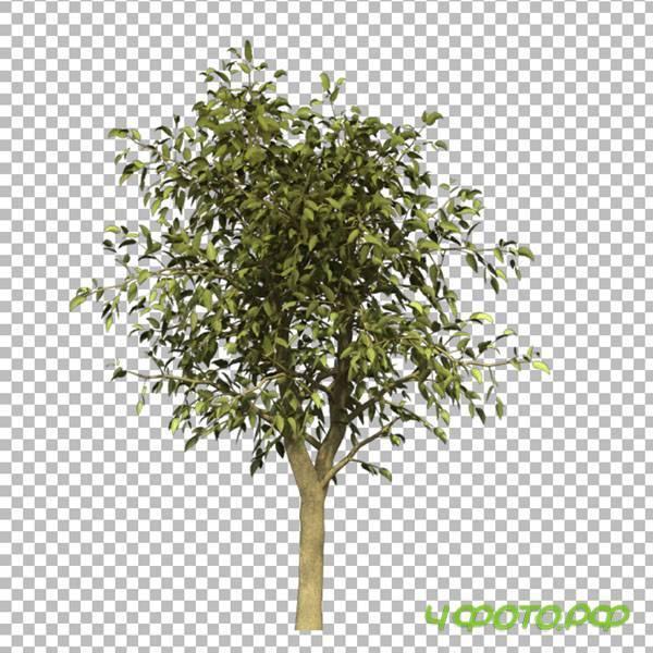 Шаблоны генеалогического дерева в формате фотошоп psd