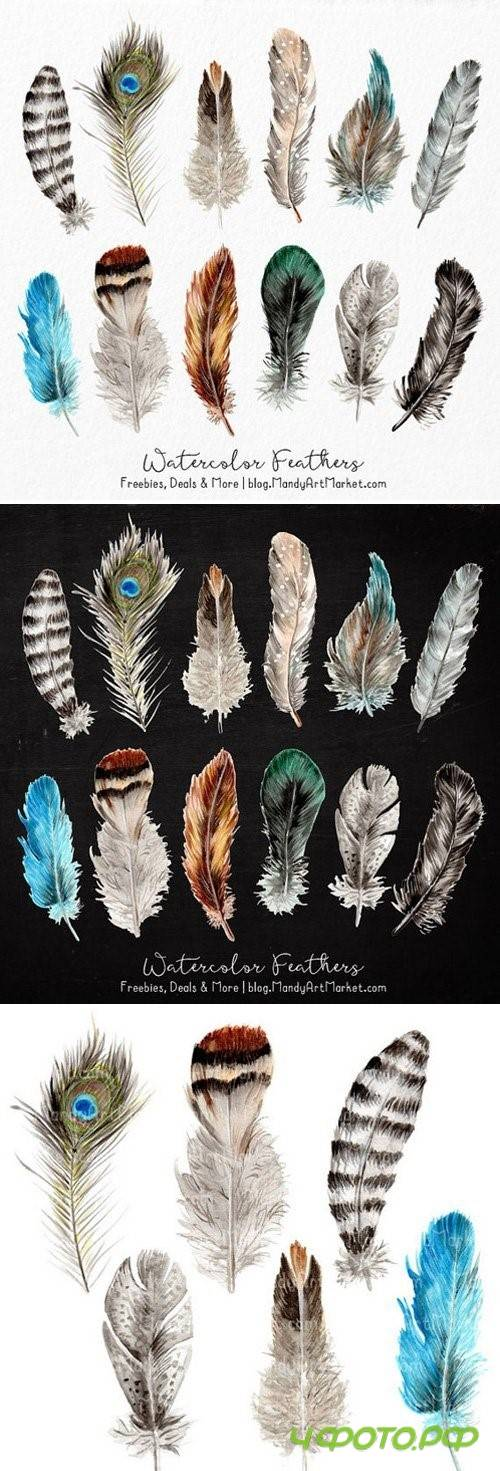 Natural Watercolor Feather Clipart