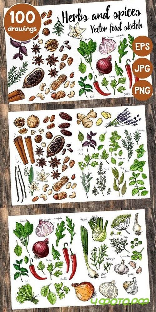 Sketches herbs and spices 1425383