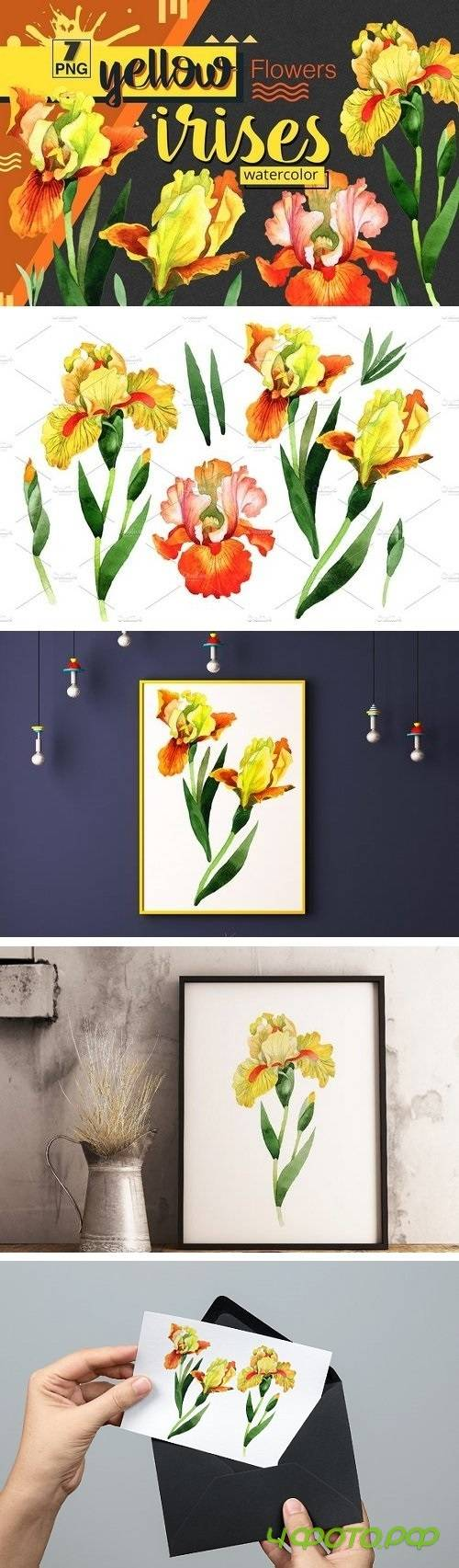 Yellow irises watercolor PNG clipart - 1539921