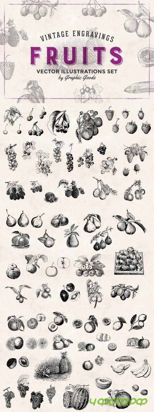Fruits Engravings Set 478896