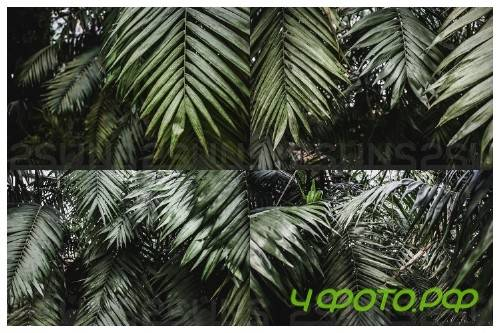 Tropical textures background pack vol 1 leaves backdrops - 237675