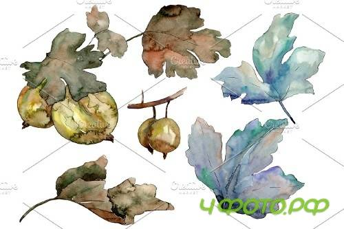 Gooseberry plant ordinary watercolor - 3942874