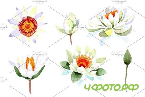 White lotus flower watercolor png - 4000631