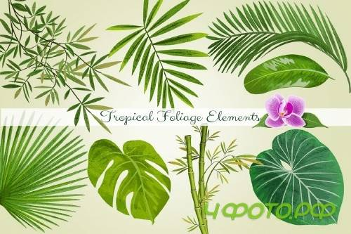 Tropical Foliage PNG Graphic Elements and Digital Paper - 167306